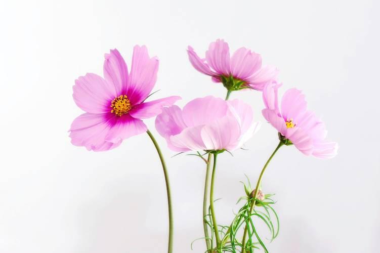 お墓参りのお花は造花でもOK?タブーとおすすめ、片付けの方法をご紹介